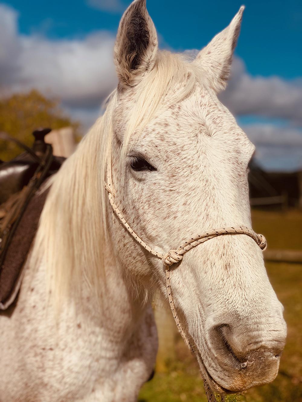 caballos de luz